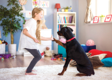 Benefits Of Bonding With A Pet - Life Tips