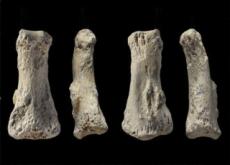 Finger Bones Of Homo Sapiens Found In Saudi Arabia - Science