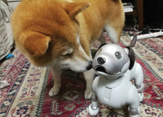 Can A Robot Dog Make Friends With A Real Dog? - Science