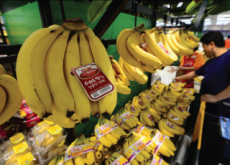 Imports Of Foreign Fruits - National News