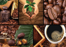 Coffee Is Facing The Danger Of Extinction - Science