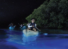 Bioluminescent Bay - Places