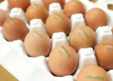 Egg-Laying Dates On Eggshells - National News