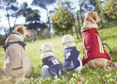 International Guide Dog Day - History