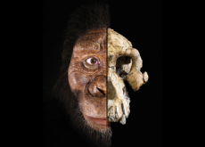 The Face of an Early Human Ancestor - What's Trending