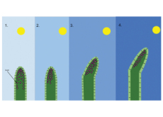 Sunflower-Like Rods Boosting Efficiency of Solar Collectors - Science