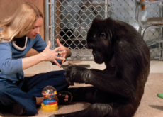 Apes Are Smarter Than We Think - What's Trending
