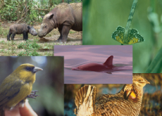 Animals in Danger of Extinction - What's Trending