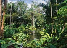 Singapore Botanic Gardens - Places