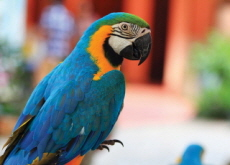 How to Train a Parrot to Speak - Science