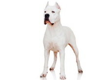 Recently Recognized Dog Breeds - What's Trending
