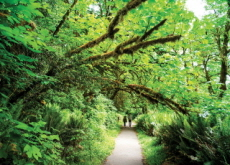 The Chungnam Provincial Government's Forest Campaign - National News