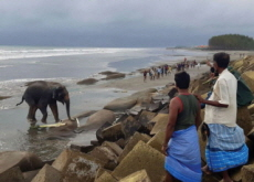 Myanmar Elephants Rescued by Locals - World News
