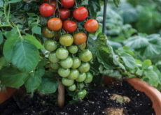 What Are GMOs? Are They Beneficial? - Guest Column