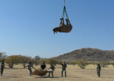 Scientists Hang Rhinos Upside Down From Helicopters - Science
