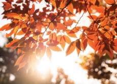 How To Stay Healthy When the Seasons Change - Life Tips