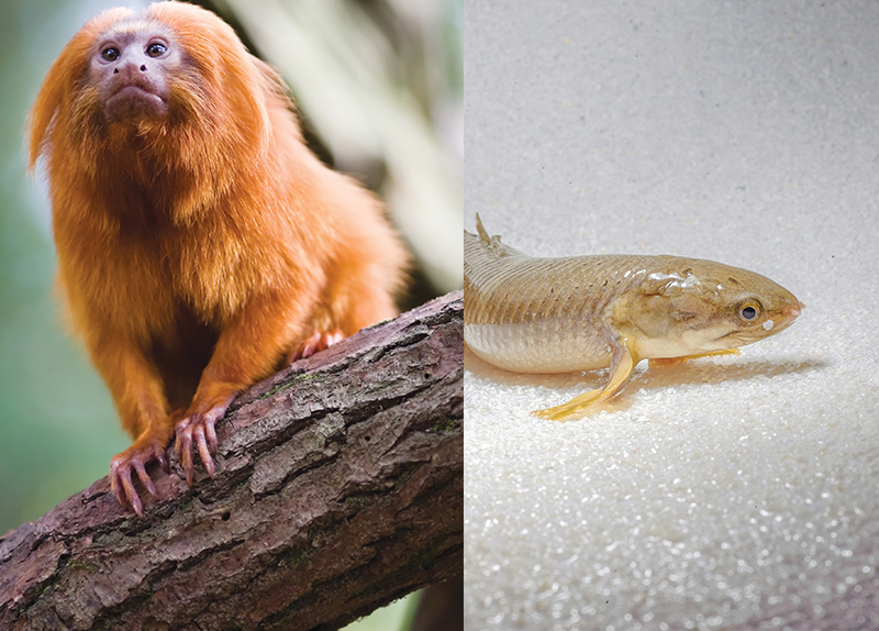 New Species Found in the Himalayan Region