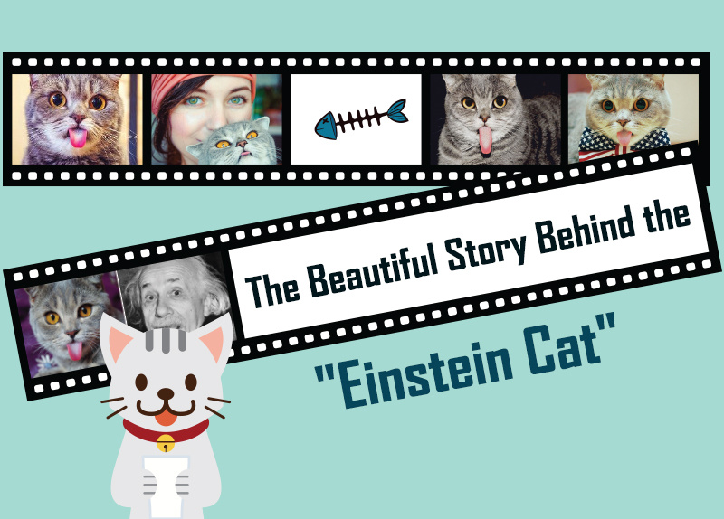 """The Beautiful Story Behind the """"Einstein Cat"""""""