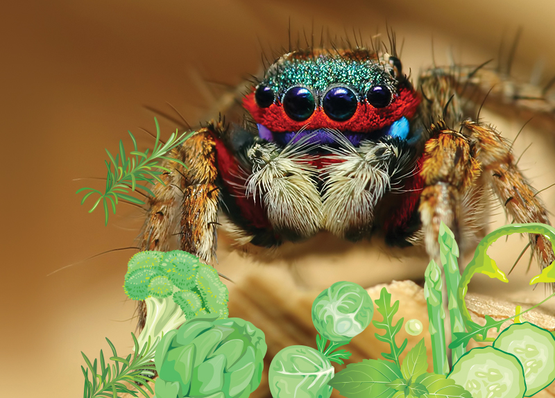 Guess What? Spiders Love Their Greens Too!