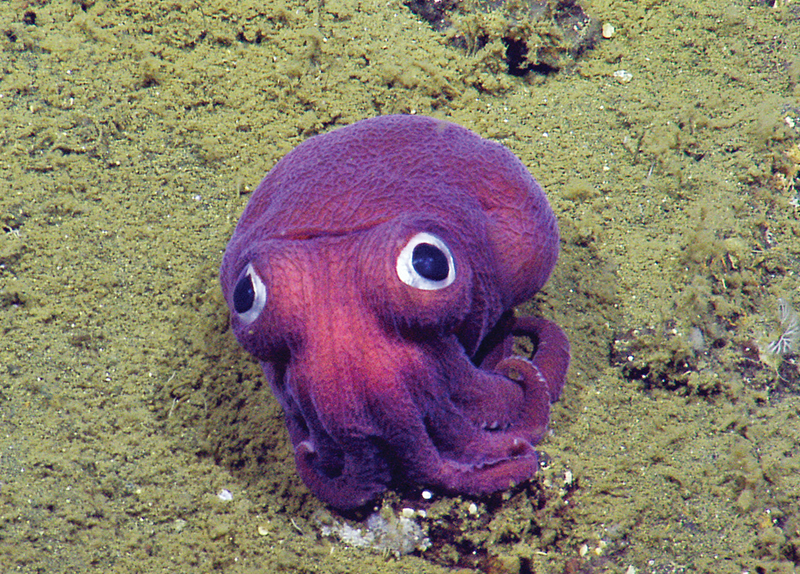 The World's Most Famous Squid!0