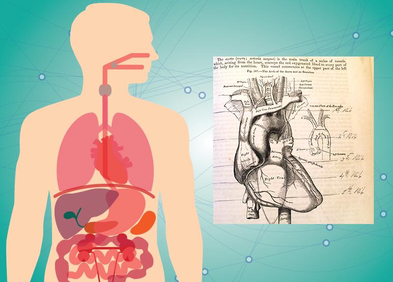 New Organ In The Human Body0