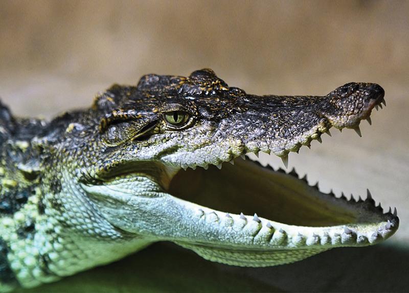 A Bride Survives A Crocodile Attack