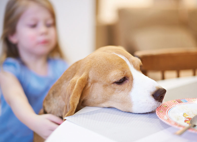 Beagles Found to Sniff Out Lung Cancer0