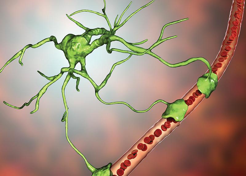 Can Astrocytes Regulate Sleep Depth? (Mon.)