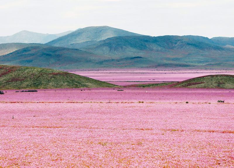 Flowery Desert
