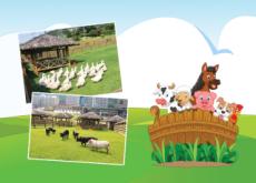 Petting Zoo Mania! - National News