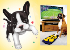 Paw-Friendly Remote - What`s New?