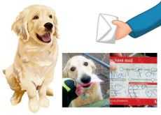 Letters for a Dog - What`s New?