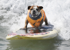Surfing Dogs / Baby Coati  - Photo News
