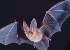 Bat Babble - Science
