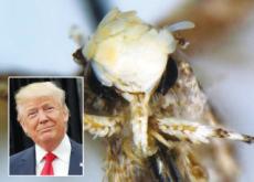 Presidential Moth - Science