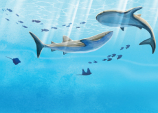Whales Form Super Groups - Science