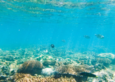 Save The Reef! - World News