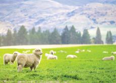 NATIONAL FLAG & CAPITAL SERIES: New Zealand - Culture