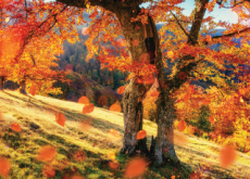 Why Do Leaves Change Color In the Fall? - Science