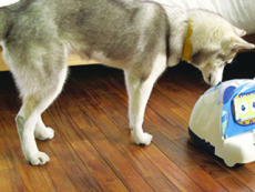Play Smart With your Pets - Science