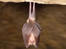 Bats - Science