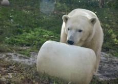 Two Polar Bears Make Their Debut - World News