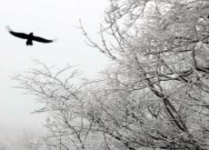 Jeju 1,100 Altitude Wetland - Let's Go