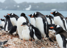 Characteristics Of Penguins - Science