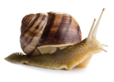Characteristics Of Snails - Science