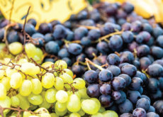 Korean Farmers Export Grapes To North America - National News