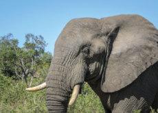 Characteristics Of Elephants - Science
