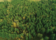 The Value Of Trees	 - National News