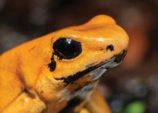 Poison Frogs' Special Neuron Receptors - Aha!