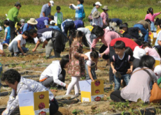 Cheondeung Mountain Sweet Potato Festival - Let's Go